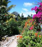 Ostrov Grand Cayman - Motýlí farma